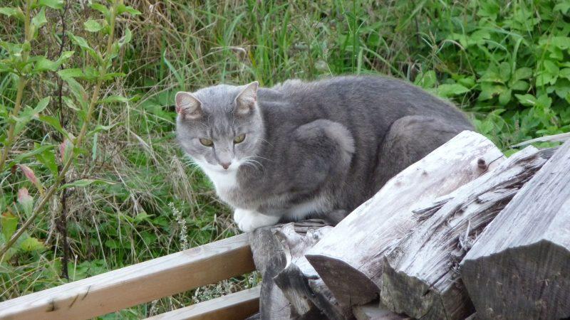 Katt på vift. Foto: Lisbeth Svensson