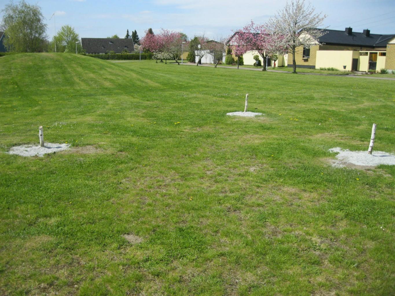 Sågade träd Månområdet 7 maj 2012 Foto: Green Landscaping