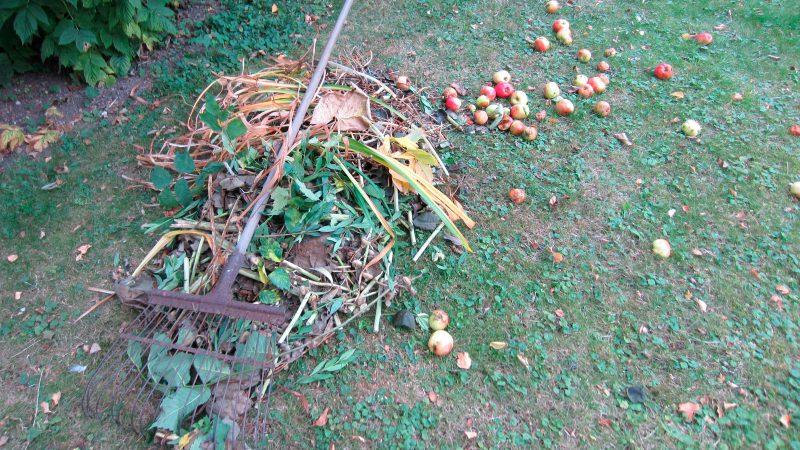 Trädgårdsavfall höst Foto: Marie Schyllert