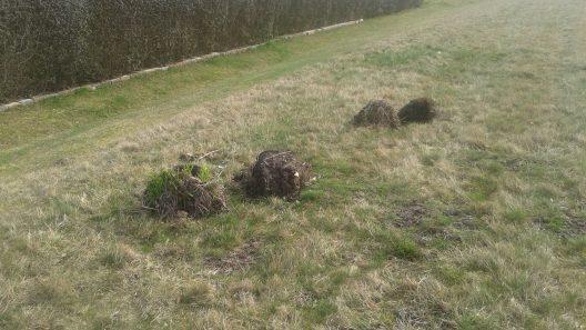 Utkastade sommarplantor. Foto: Staffanstorps kommun