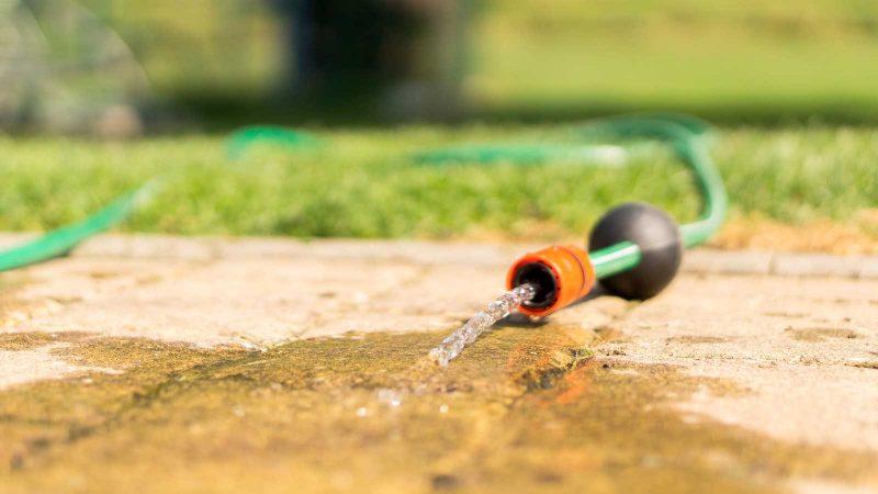 Vattenslang. Foto: torstensimon via Pixabay