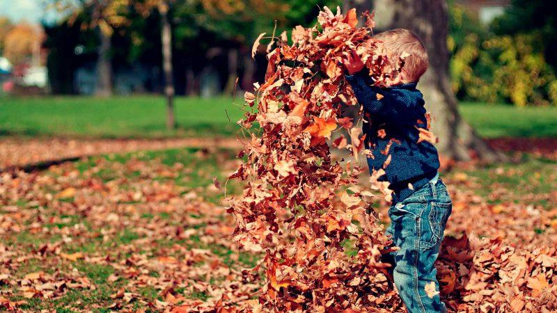 Lek med löv. Foto scottwebb via Pixabay