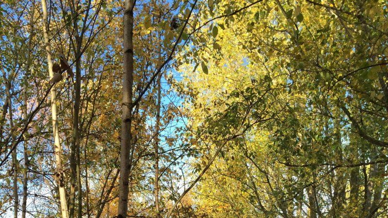 Träd i Hjärup. Foto: Anna Fogelberg