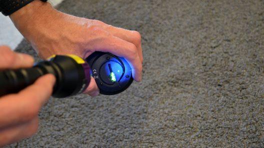 MärkDNA blir synligt i grön färgunder uv-lampans blåa sken. Foto: Andreas Holm
