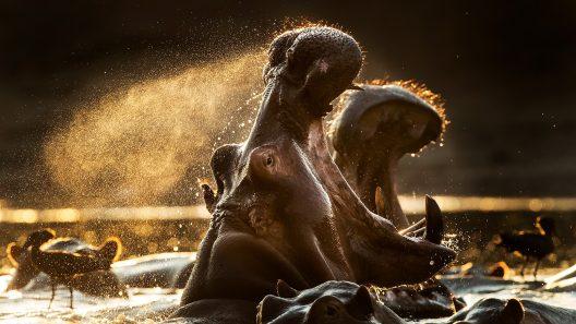 Fotografi på djur. Foto: Brutus Östling