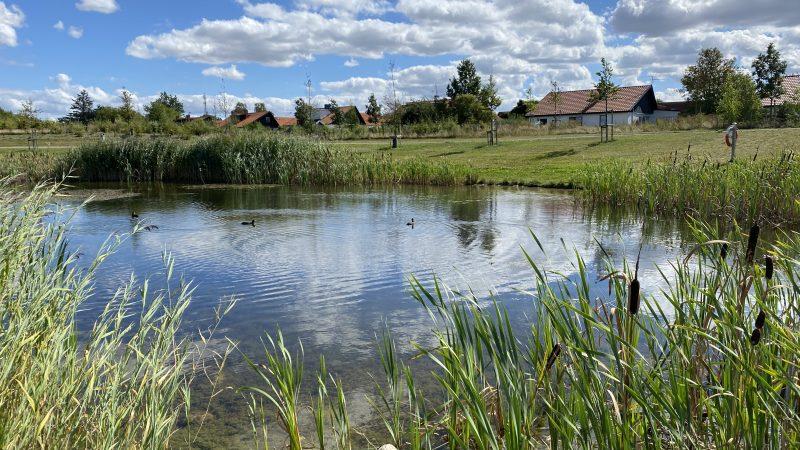 Dagvattendamm i Hjärups park Foto: Therese Grönvall